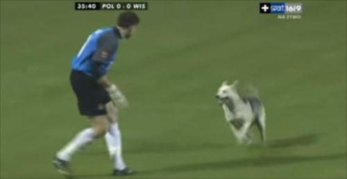 120点!突然試合に乱入してきた犬へのキーパーの対応が完璧だった