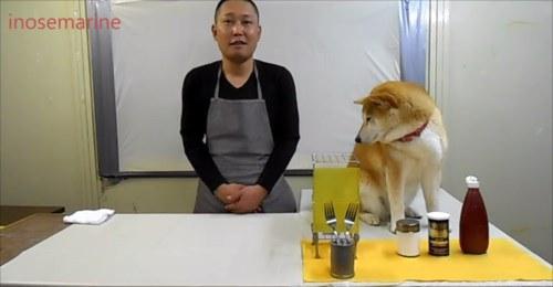 爆笑 柴犬コント!クッキングを手伝う柴犬と先生のコントがおもしろすぎる