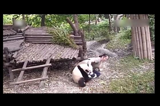 『行かないで~』飼育員さんに甘えるパンダが超カワイイ♡