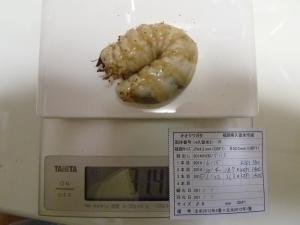 14久留米2-16 313g ×