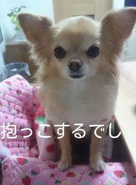 blog2015010801.jpg