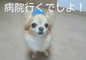 blog2015012001.jpg
