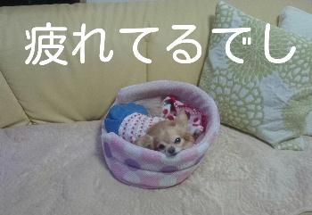 blog2015012101.jpg
