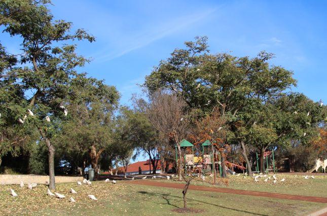 5:22公園LittleCorella