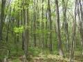 萌える木々