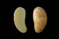 potato_002a.jpg