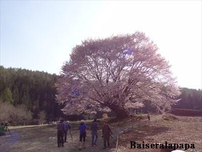 桜DSC02549_R