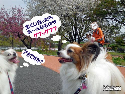 桜の木と夢
