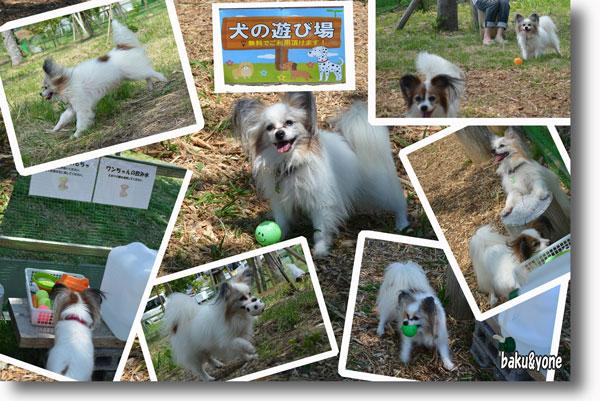 犬の遊び場