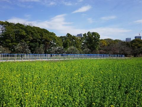 hamakamoudon02.jpg