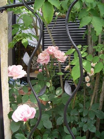 桜貝2006-1