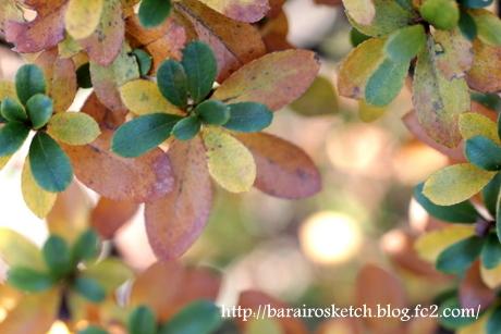 サツキの葉2