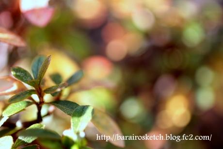 サツキの葉4