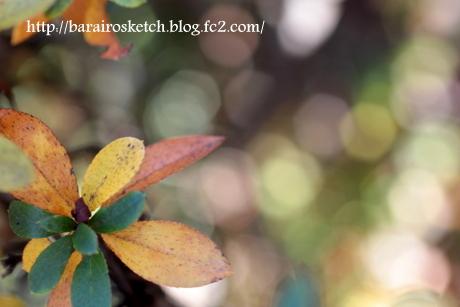 サツキの葉6