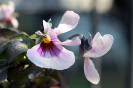 齧られた花1