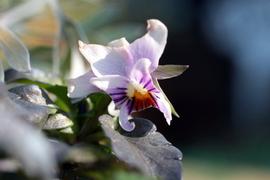 齧られた花4