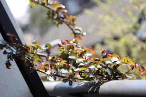 ベランダの枝12