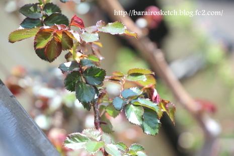 ベランダの枝14