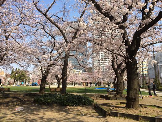 錦糸公園花見