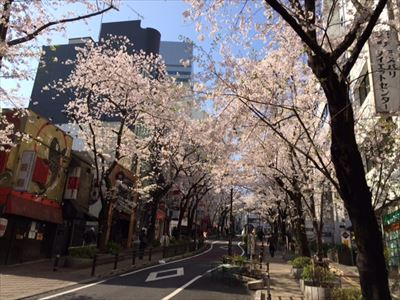 201503sakura5.jpg