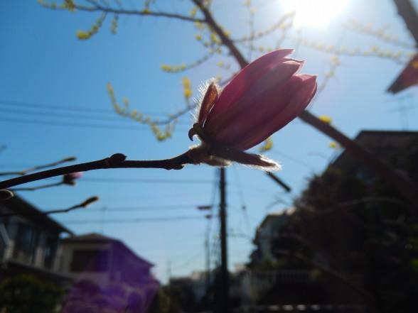 びぃなむ335-01