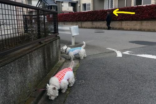 ichonohamomusimodetekita3.jpg
