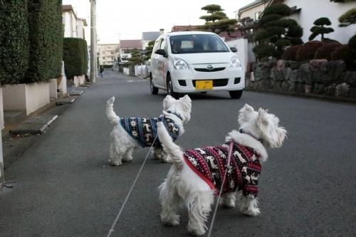 maiasaokoruiyanakoto2.jpg