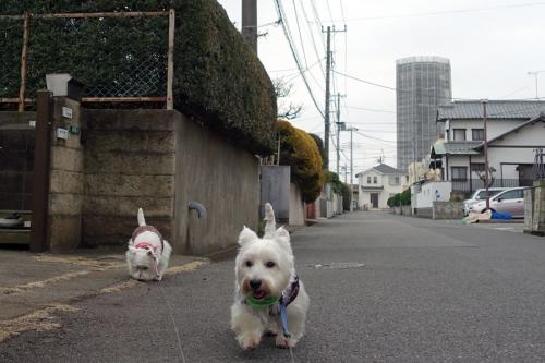 wagayanohounimokousaga3.jpg