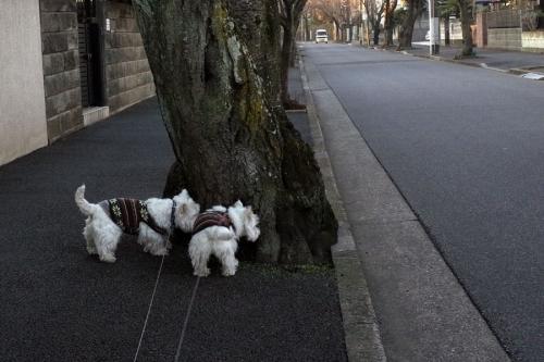 yasuminohihawakarurasiine2.jpg