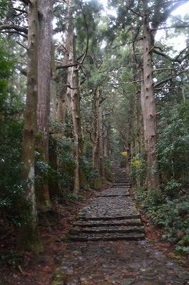 杉に囲まれた熊野古道