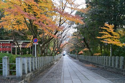 向日神社参道は紅葉が残る