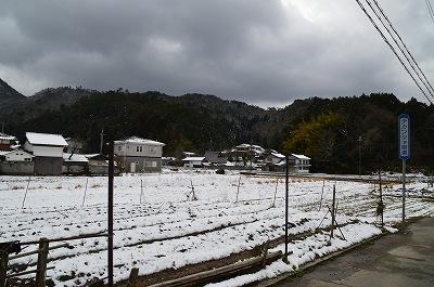 雪ですよ雪