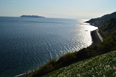 海と水仙と沼島
