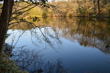 青く緑な池