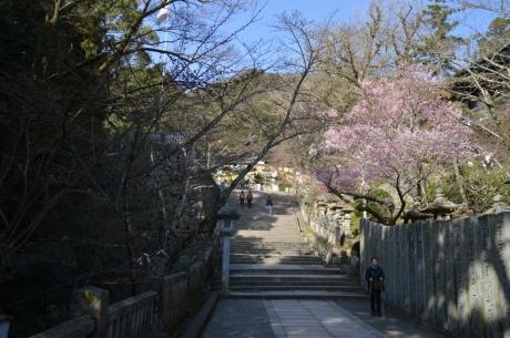 8梅が綺麗に咲く参道