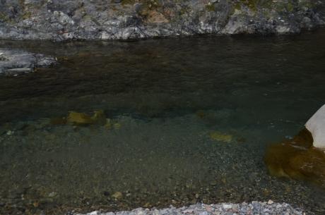 11安田川上流はすごい澄んでる