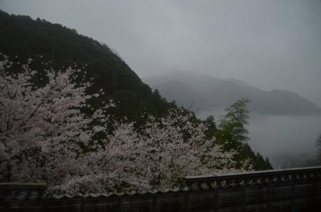 4霧とお花見