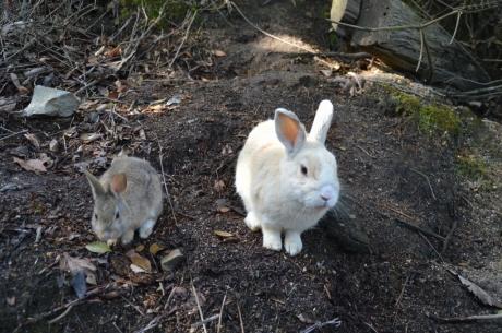 8親子ウサギ
