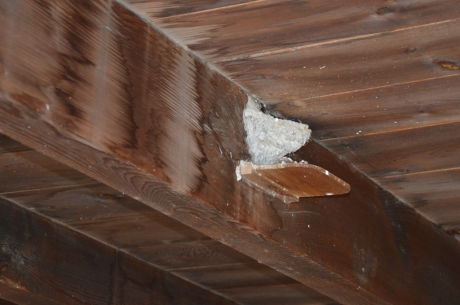 8屋内にツバメの巣