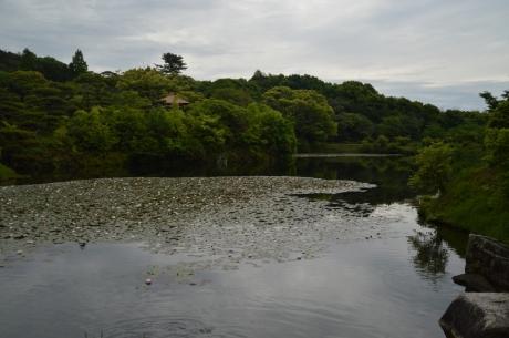 11池のある景色