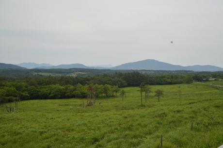 14草原と森のバランス