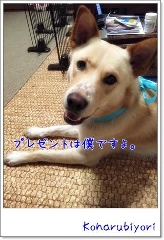 2015-04-25_1.jpg