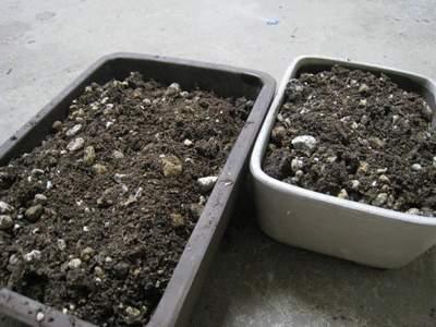 ヘチマ栽培