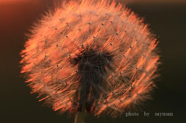 綿帽子と太陽 045-00