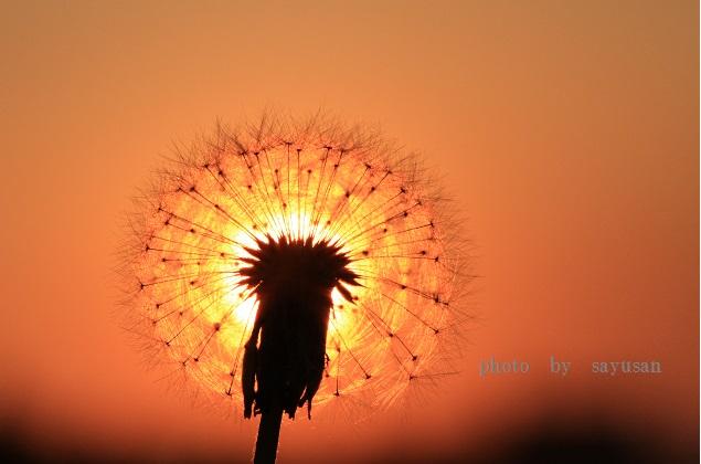綿帽子と太陽 033-002
