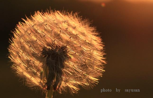 綿帽子と太陽 021-01