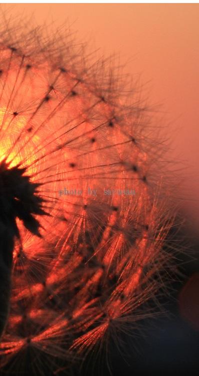 綿帽子と太陽 065-01