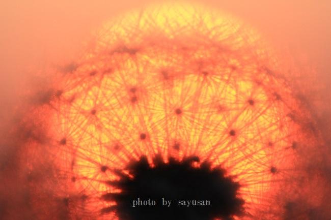 綿帽子と太陽 071-001