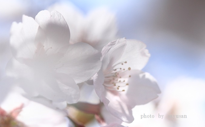 IMG_2698-03.jpg