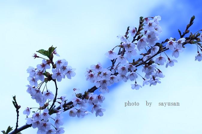 IMG_2723-01.jpg